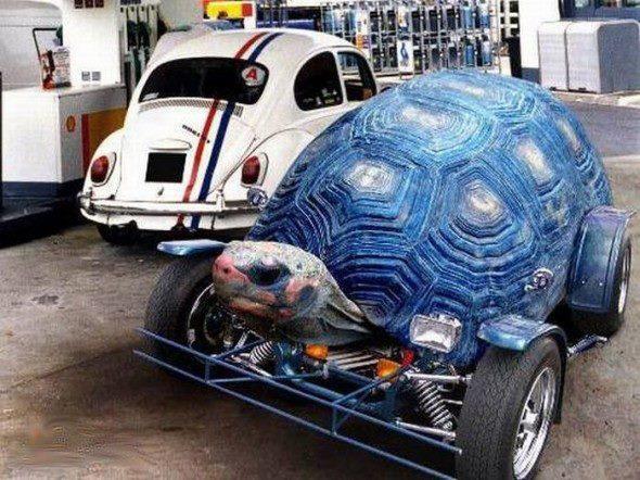9 Best Turtle Car Stuff Images On Pinterest Car Stuff