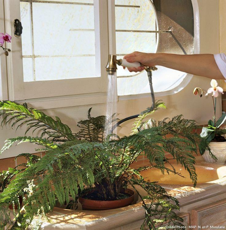 Comment Soigner Ses Plantes D Intérieur En Hiver