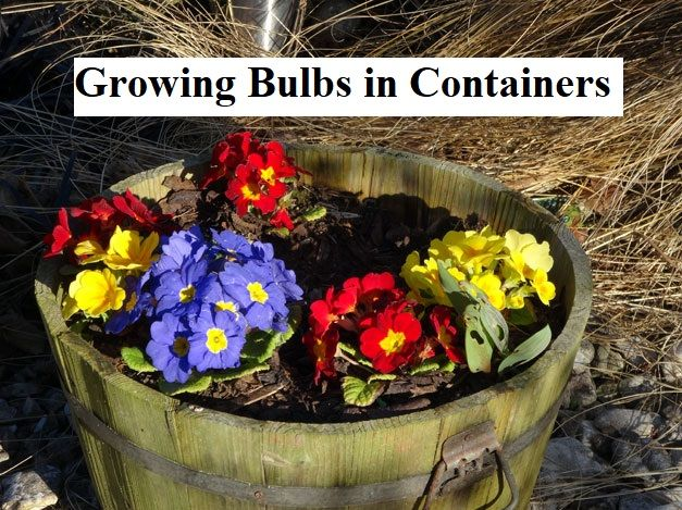 Growing Bulbs in Containers  Save Space and Brighten Up Your Landscape in Every … – Gardens Nursery
