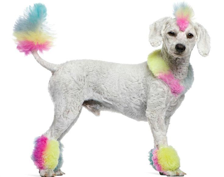 Kinesiologisches Tape bei Hunden