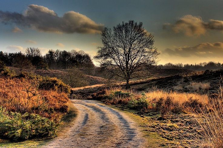 Fall at the 'Posbank' at national park 'Hoge Veluwe'