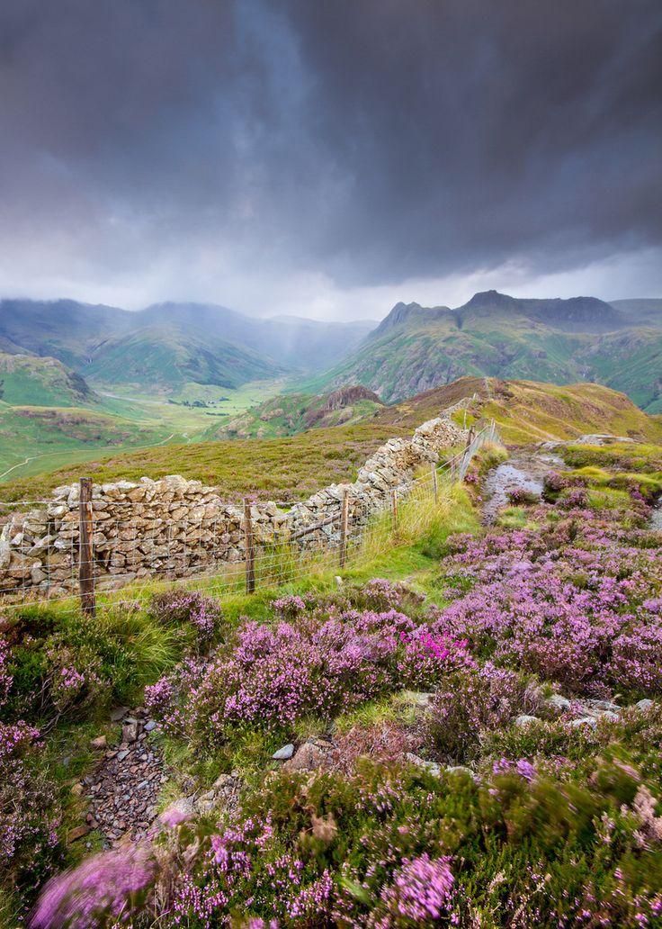 Rain on heather...the Langdale Pikes, Lake District, England |  Anita Nicholson *