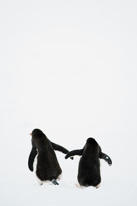 Two penguins holding wings as they walk through the snow.