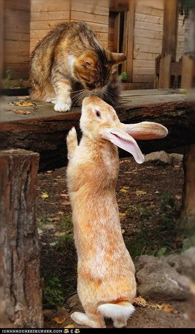 sniff sniffRabbit, Animal Friendship, Cat, Best Friends, Easter Bunnies, A Kisses, Odd Couples, Kitty, New Friends