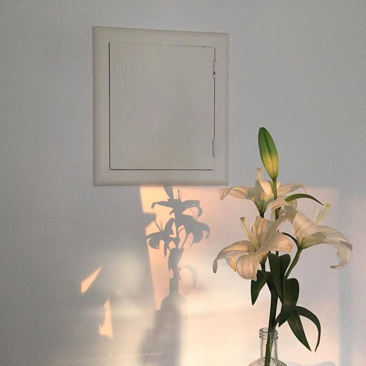 Liz m xico 21 ambiente arte sombra flores y luz - Luz y ambiente ...
