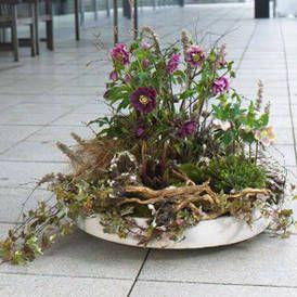 Zauberhafte Christrose: Winter-Bepflanzungen für Balkon und Terrasse