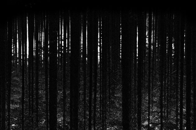 Forest - Landscapes by photographer Kjetil Hasselgård www.kjetilhasselgaard.com