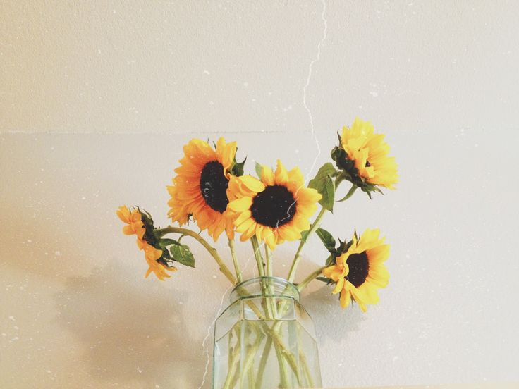 when I die put sunflowers on my grave. I hate roses.