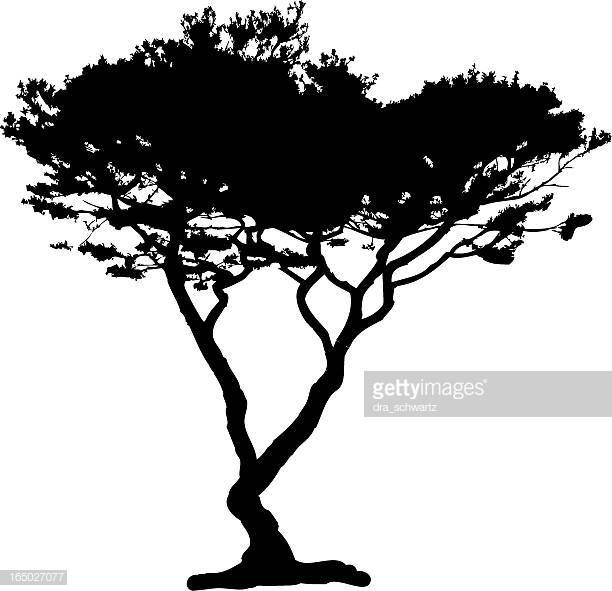 Google Image Result For Https Media Gettyimages Com Vectors Acacia Tree Silhouette Vector Vector Id165027077 S 612x6 Acacia Tree African Tree Tree Silhouette