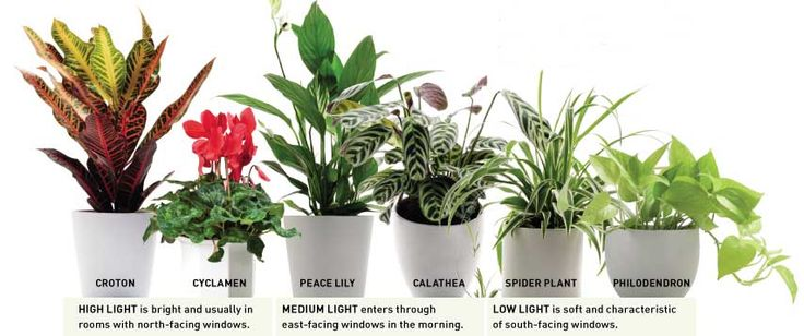 Peace lily aloe vera african violets bamboo spider plants for Best plants for bathrooms