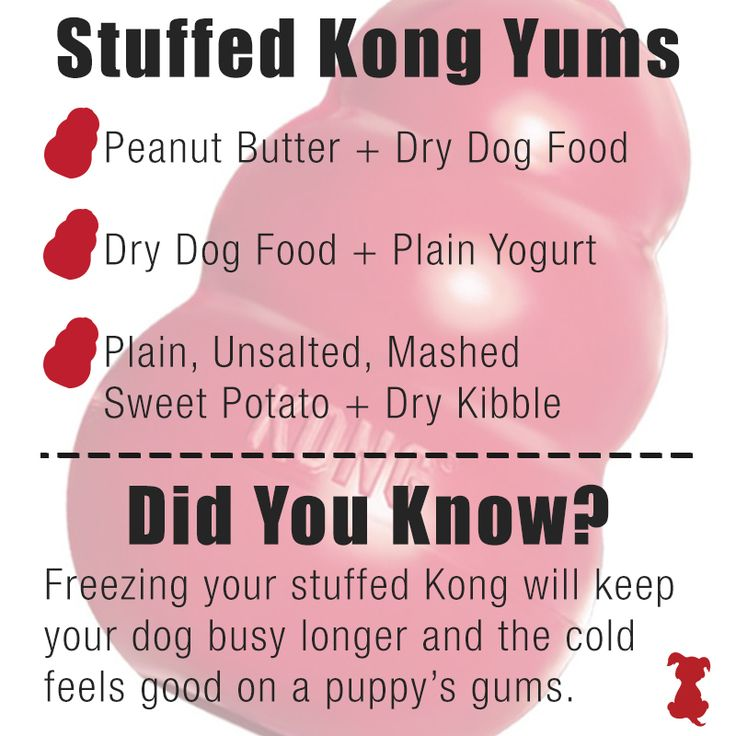 Looking for a way to fill your Kong Classic? Try these yummy recipes! #kong #recipe https://www.sitstay.com/products/kong-classic?utm_campaign=coschedule&utm_source=pinterest&utm_medium=SitStay%20Dogs&utm_content=Kong%20Classic%20-%20SitStay