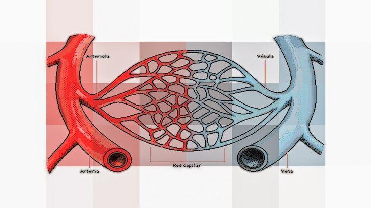 #DuvidaCruel: Se sangue é vermelho, por que veias são azuis? ↪ Por @jpcppinheiro. O sangue é vermelho. Em seu trajeto, sai do coração pelas artérias, chega nas células e retorna pelas veias. No caminho, ele continua vermelho. Por que então é que as veias são azuis? Veja a resposta para essa #DúvidaCruel! http://curiosocia.blogspot.com.br/2015/01/se-sangue-e-vermelho-por-que-veias-sao.html