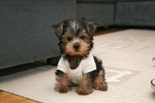 Too cute!! <3