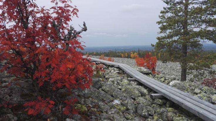 Trail of trees -Rovaniemi, Lapland, Finland