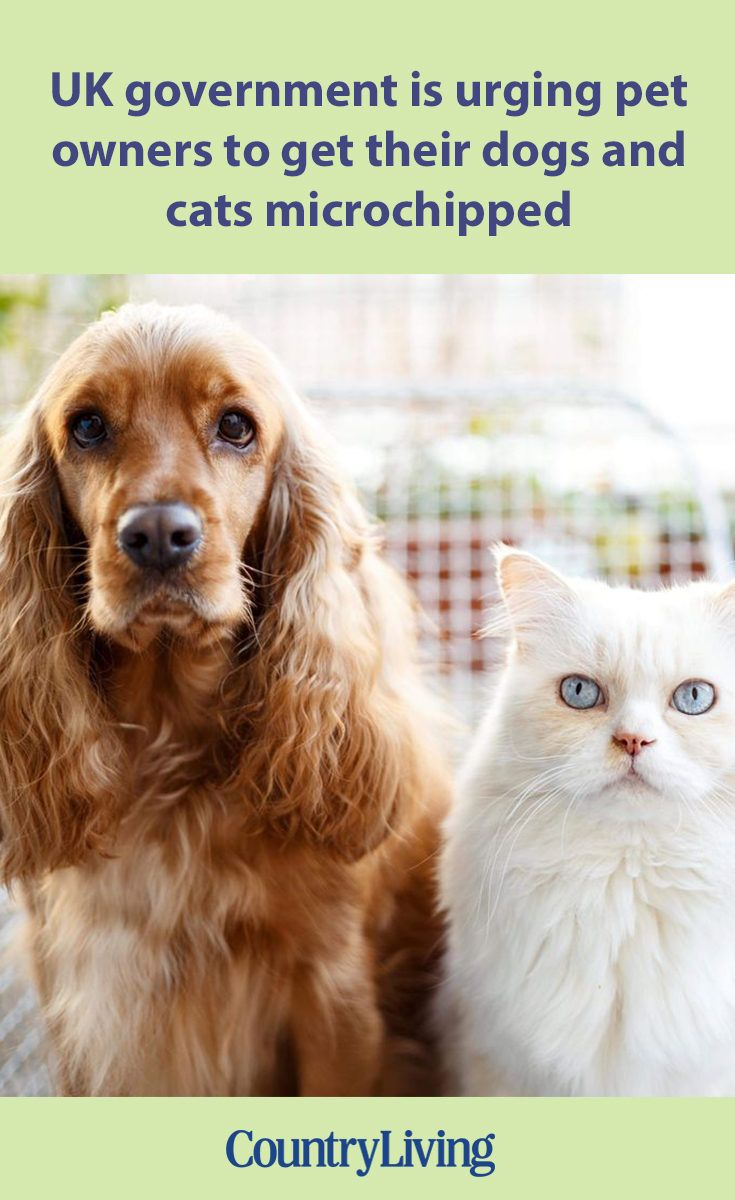 The Government Want All Pet Owners To Employ Important Resolution