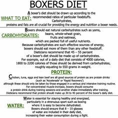 Bethebest3: boxers diet - Be a Professional Boxer
