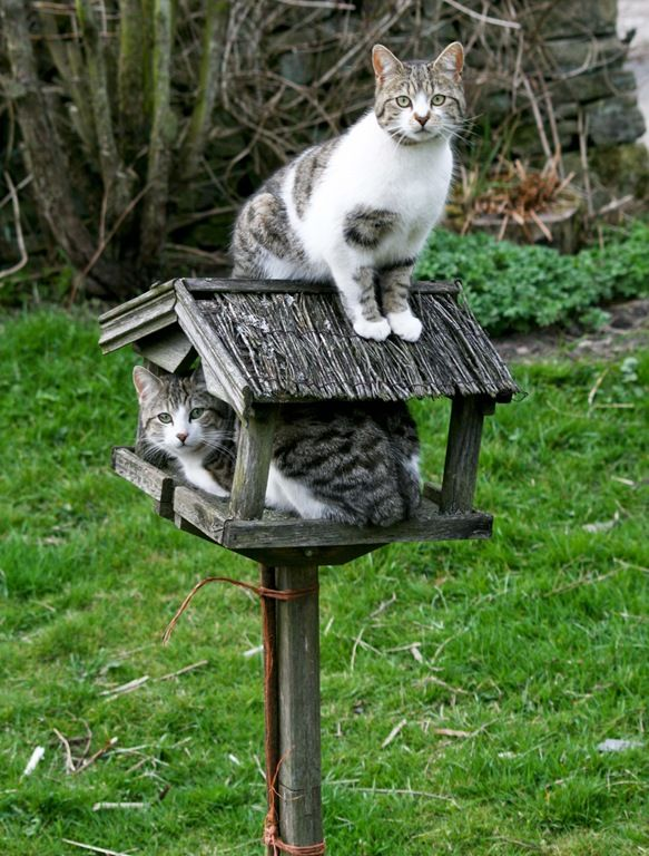 Oh kitties...hate to break it to you, but I really DO think 'they' are smarter than that!
