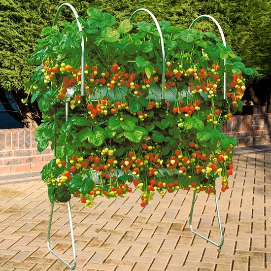 Planting Vegetables In Pots Ideas