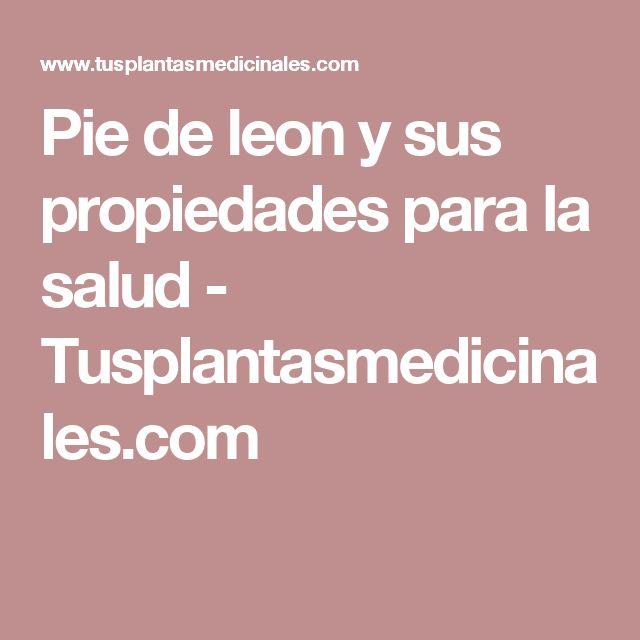 Pie de leon y sus propiedades para la salud  - Tusplantasmedicinales.com