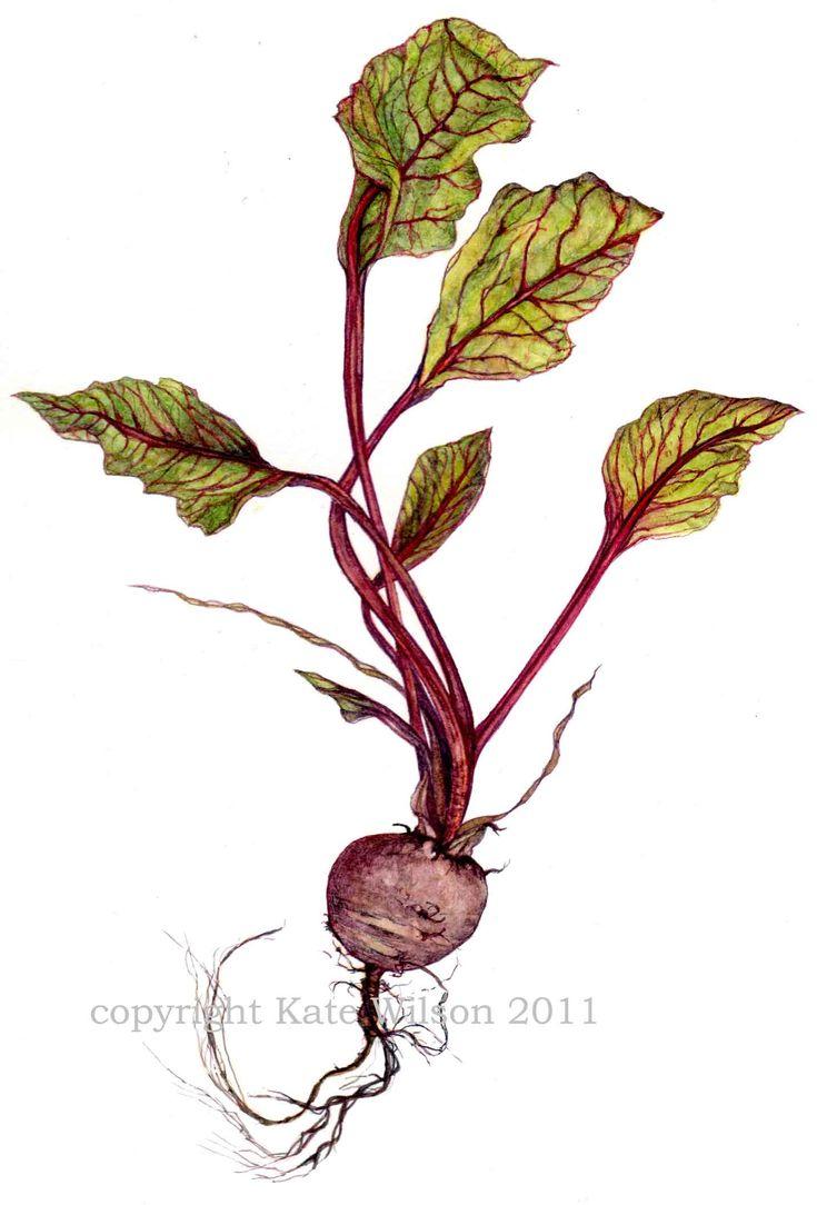 72 best fruits et légumes images on pinterest vegetables
