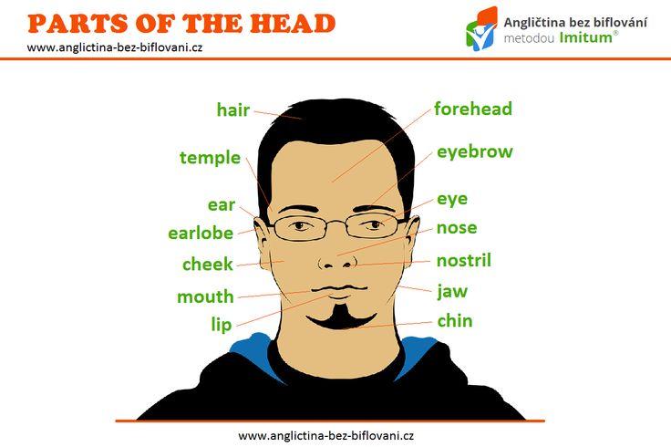Hlava je horní část lidského těla nad krkem. Dokážete anglicky pojmenovat její části? #head
