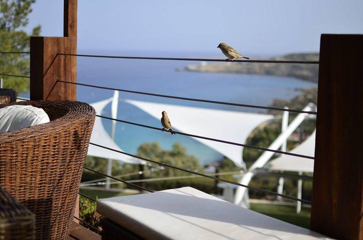 A bird's eye view of the bay from the Cliff Bar! #GrecianPark #CliffBar #Cyprus #Protaras #View #Mediterranean #Sea #Bird #Birds #Cafe #Restaurant #Bar http://www.grecianpark.com/restaurant-in-protaras.html