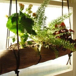 Palm Frond Hanging Planter