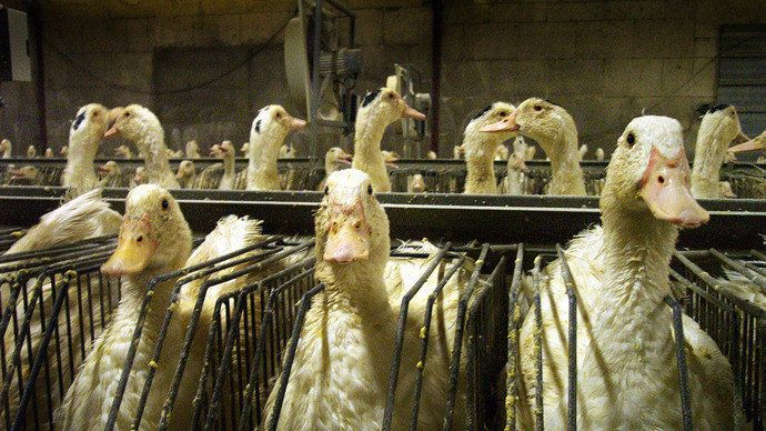 No to the compensation of producers of foie gras