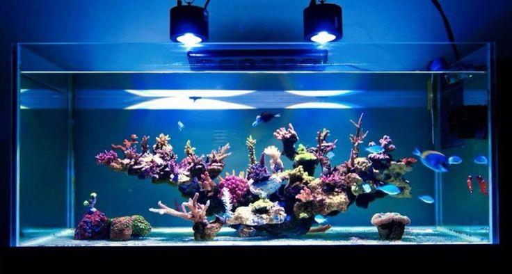 Aquarium, Akvaario, Aquarium Stuff, Reef Aquarium, Reef Tanks ...