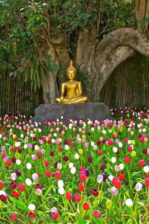 Buddha in a field of tulips