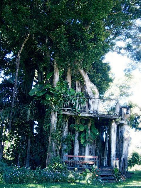 Hawaiian treehouse: Hawaiian Houses, Hawaiian Treehouse, Cool Houses, Treehouse Magic, Tree Houses, Treehouse Porn, Photo, Treehouses Cabins Hom, Eye