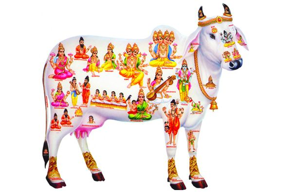 In India, we worship cow as Mother Goddess, we call her 'Kamdhenu'. Milk obtained from cow is regarded same as nectar! Do you the urine of cow, also called 'gomutra' can do miracles for your health! Have a look to our article and you will say the same. Spiritual significance of Cow: It is also …