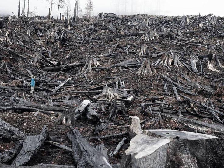 Ambiente: il concorso Fotografo dell'anno - Corriere.itUna donna nella foresta abbattuta e bruciata nella valle di Klanawa, nell'isola di Vancouver, Columbia Britannica
