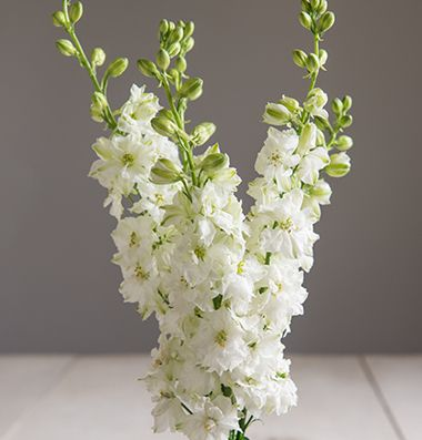 White Larkspur (also comes in pink) - perfect English country garden flower - fairly small, would look lovely in bouquet/posies.