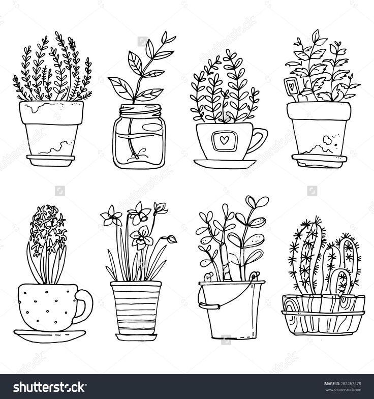 Flowers In Pots Painted Black Line On A White Background Vector Drawing Lines Background Black Drawing Botanical Line Drawing Plant Drawing Plant Doodle
