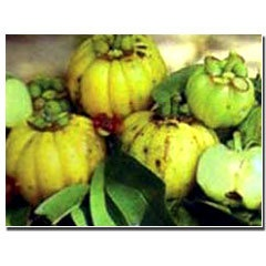 Garcinia cambogia - Dr OZ Recommended weightless tip. At least 500 MG no more than 3,000. at least 50% active ingredient.