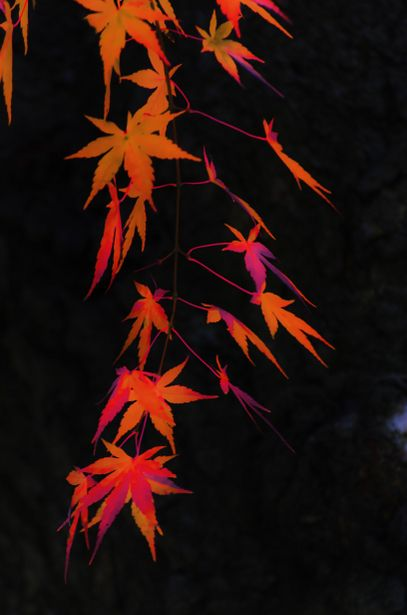"Japanese colors 深緋色 - Japanese has many words for colors. This red is 深緋色 (kokihi-iro) and means ""flamboyant red""."