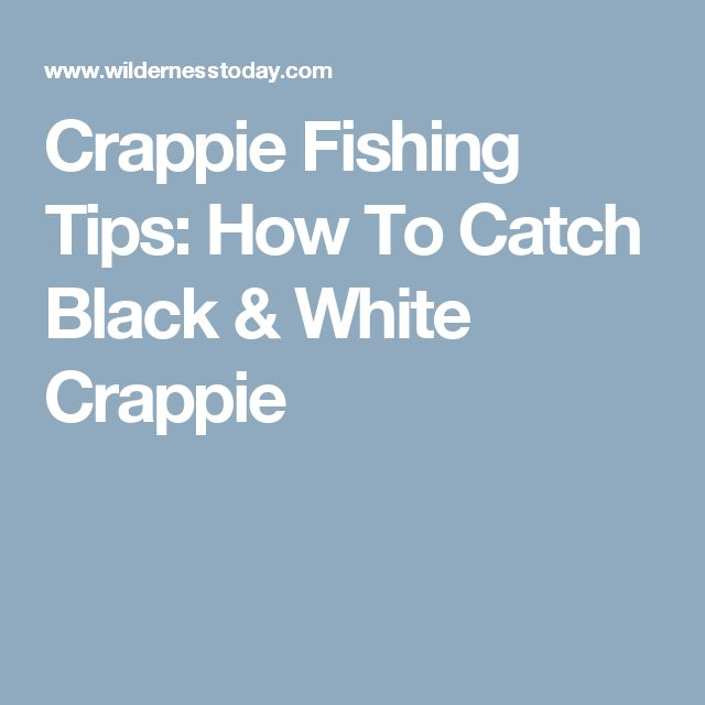 25 best ideas about crappie fishing tips on pinterest for How to fish for crappie from the bank