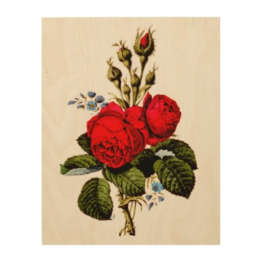Moss Rose ~ Vintage Beautiful Flowers Art