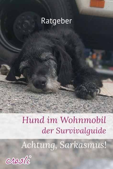 Zwei Hunde in einem Wohnmobil - da liegen Freud und Leid SEHR nahe beeinander ;-)