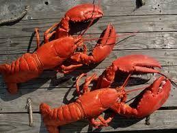 ผลการค้นหารูปภาพสำหรับ lobster menu promotion