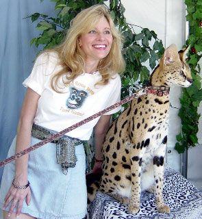 Pin on Serval & Savannah Cats