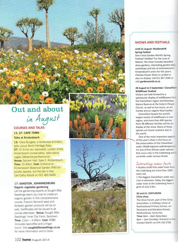Almost time for the Clanwilliam Wild Flower Show 2014!
