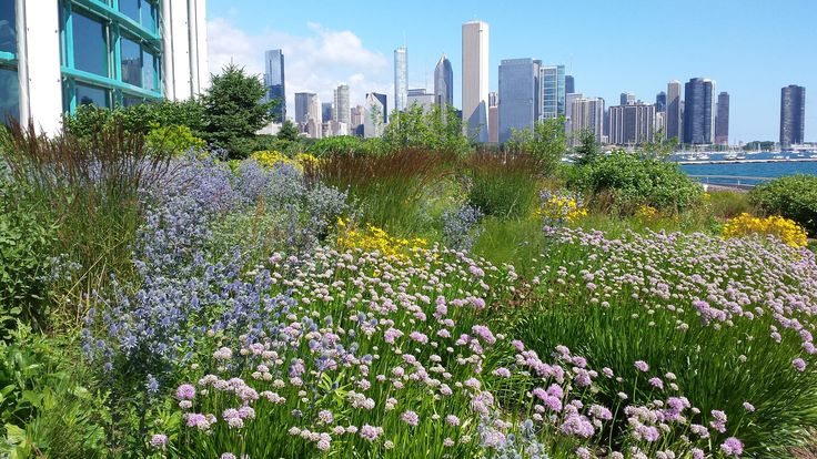 The lake side of the Shedd Aquarium in Chicago.  This is the third year.  We replaced 8,000 sq. ft. of turf.