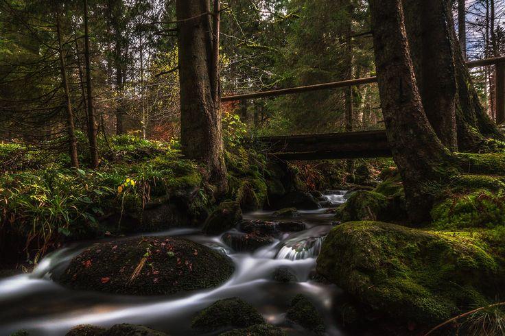 near mount lusen, bavarian forest