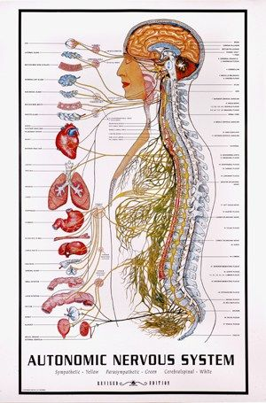 What Is Biodynamic Craniosacral Therapy? – Biodynamic Thought