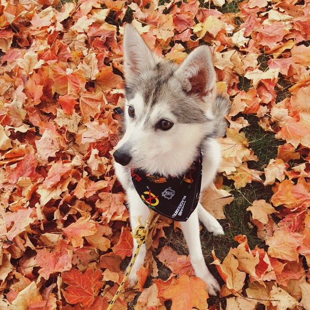 crunchy leaves are the new stick