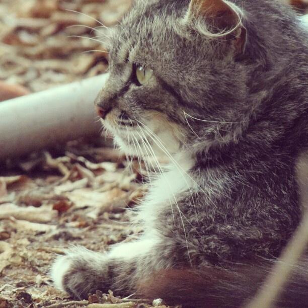 Vira-lata | Animals and their cuteness! | Pinterest