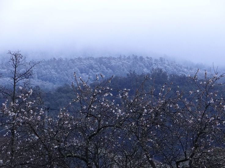 Spring arriving but winter holding on! Grove Tasmania 2014