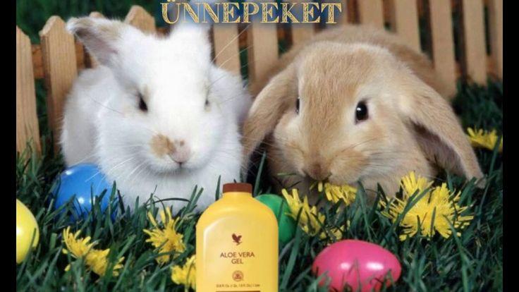 Kellemes Húsvéti Ünnepeket kívánunk szeretettel!